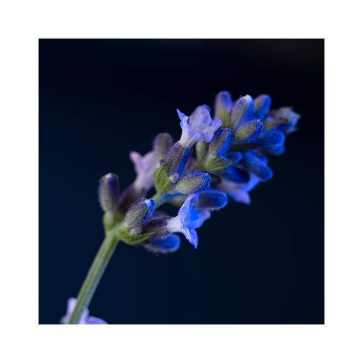 Yves Saint Laurent Y Le Parfum Perfume de Hombre
